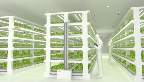 Toshiba, la foto del progetto sull'agricoltura