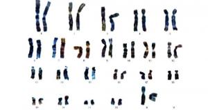 Le malattie genetiche vengono studiate attraverso l'uso di organismi avatar