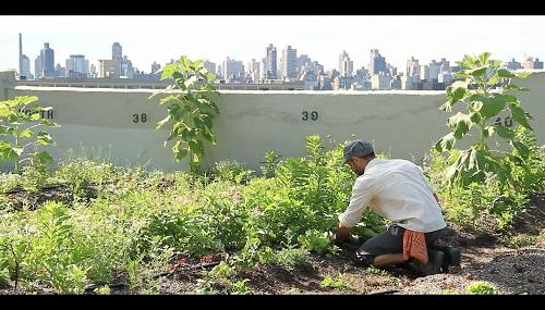 Orti verticali sui tetti dei palazzi per una agricoltura smart
