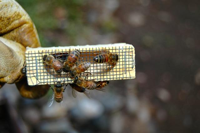 Corso di apicoltura per persone paraplegiche