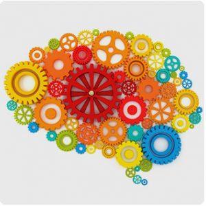 Nuove scoperte sul cervello