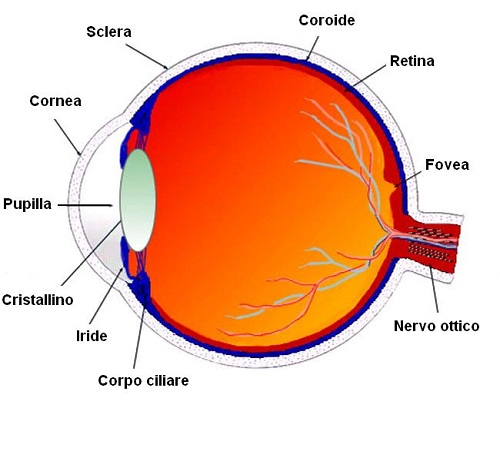 Malattie oculari e ricerca
