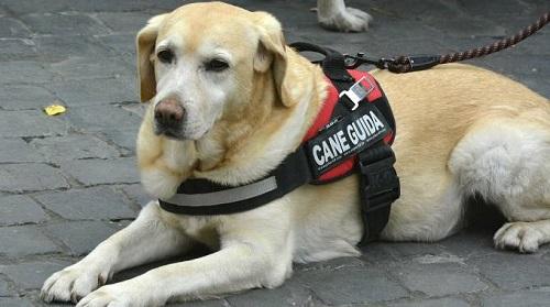 Cani guida: poco rispettata la legge